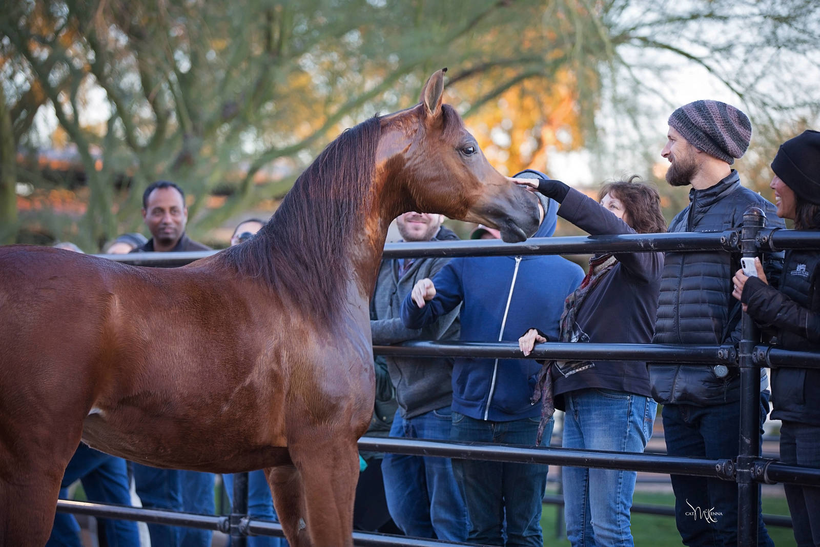 2018/2019 Arabhorse New Year's Farm Tours ~ Scottsdale!