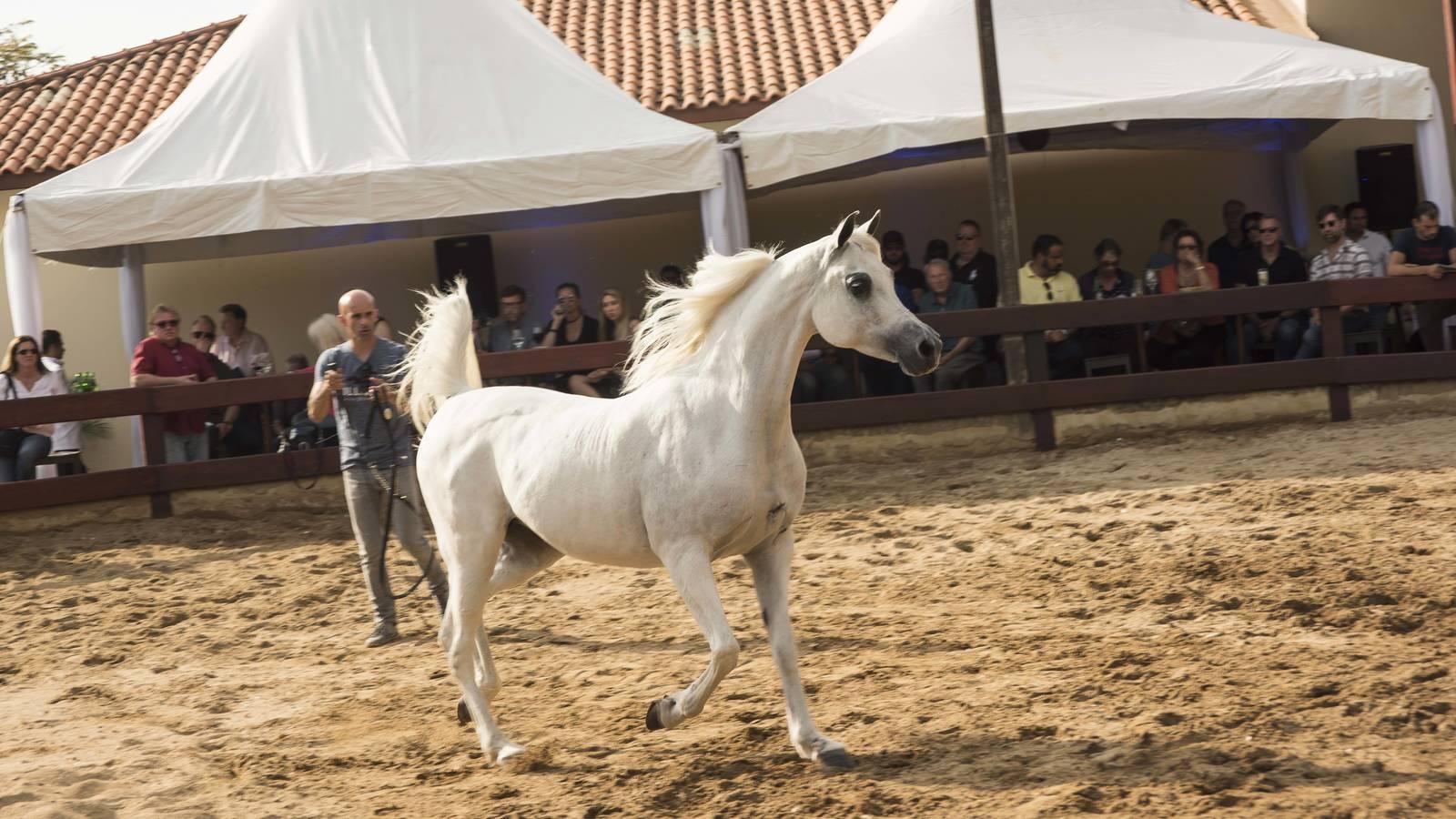 2018 Farm Tour - Horses