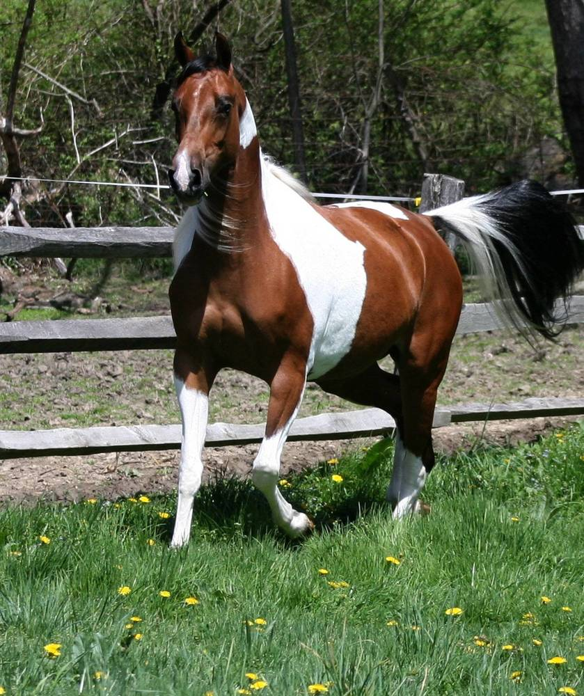 HU-JEWELS OF TUNISIA