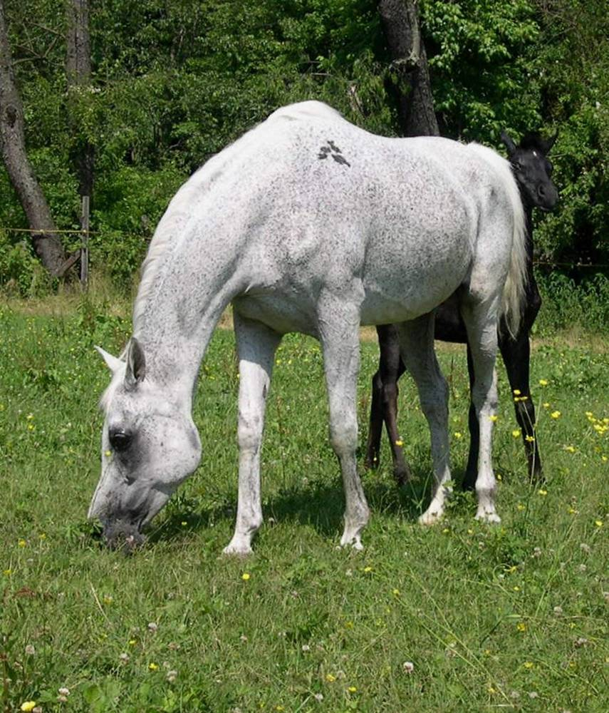 SERENITY YASMIN