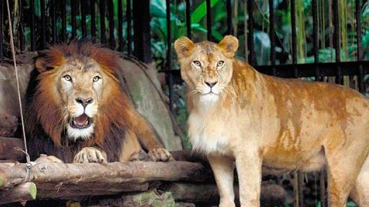 costa-rica-zoologico