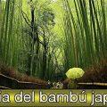 El Bambú Japonés No hay que ser agricultor para saber que una buena cosecha requiere […]
