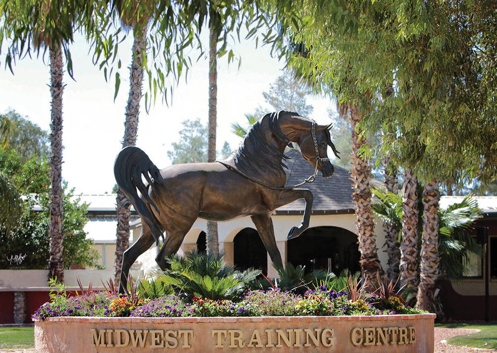 Stallion Of The Wind    Life-size Bronze