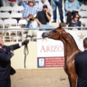 2016 Scottsdale Arabian Horse Show
