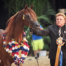 2016 Arabian Breeders World Cup - Las Vegas