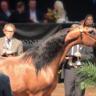 2016 Arabian Breeders World Cup - Las Vegas