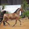 2016 Arabian National Breeder Finals