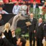 2017 Arabian Breeders World Cup - Las Vegas