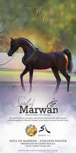 The Heart of A Champion- Soul of Marwan