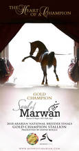 Gold Medal Champion- Soul of Marwan