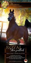 Creating Tomorrow- Royal Ghazallah