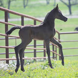 2019 QR Marc x Alia Psyche IA Filly