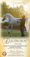 Excellence In Ivory - *Equiborn KA