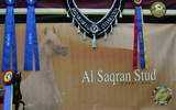 2013 Arabian Celebration