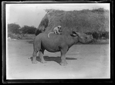 Monkey Riding Rhino