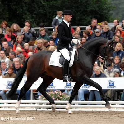 ABER HALLO 29 with Dr. Ulf Möller | Fourth Place in the Three-Year-Old Stallion Championship at the Bundeschampionate Warendorf, Germany | © Ruth Dill, 2007.