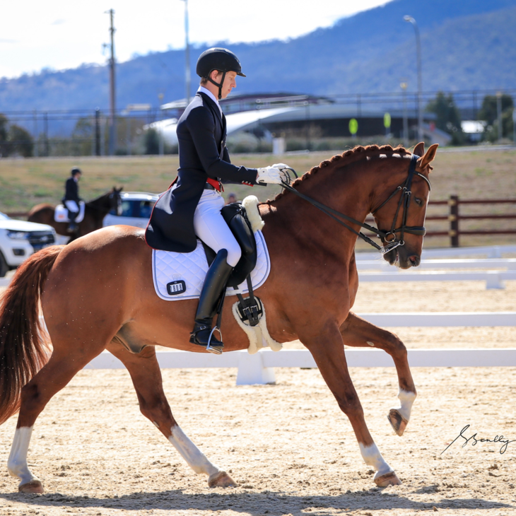 MI SIRTAINLY SIR - with Riley Alexander.  2019 NSW Dressage Championships