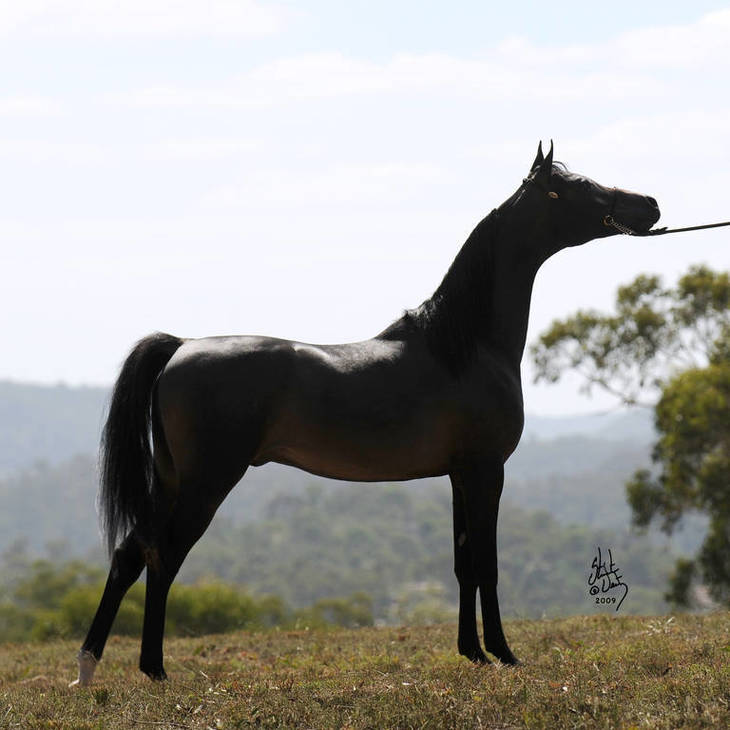 ASTOR as a Yearling