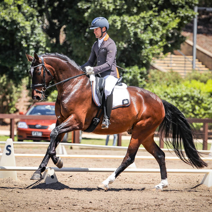 ABER FONTAINE MI with John Thompson.  Hawkesbury Dressage Club November Event | FEI 4-Year-Old OC.  Photograph © Simon Scully.