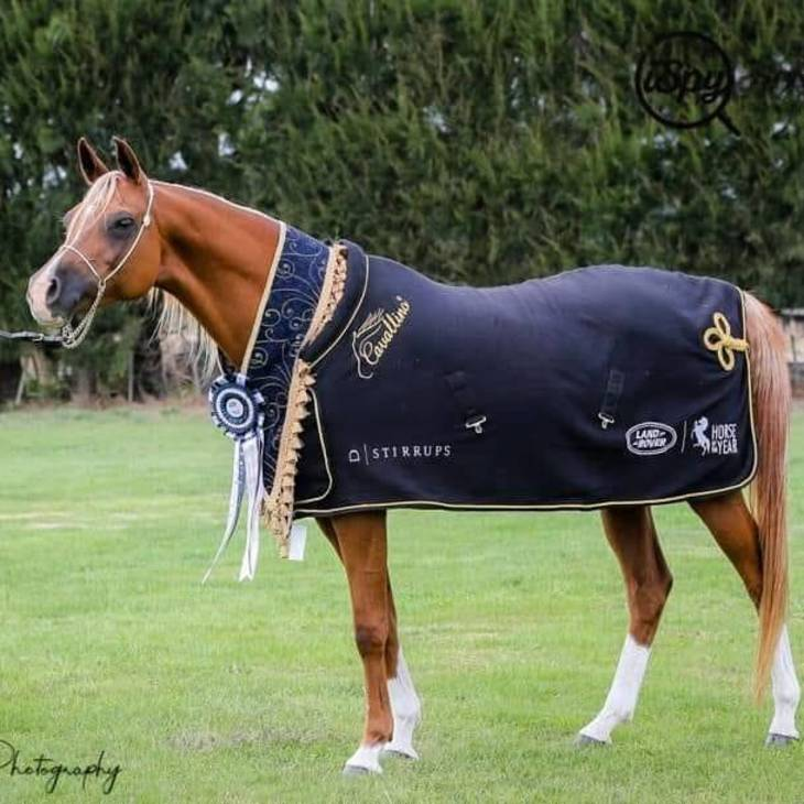 PRAVIA MI | Supreme Champion NZ HOTY