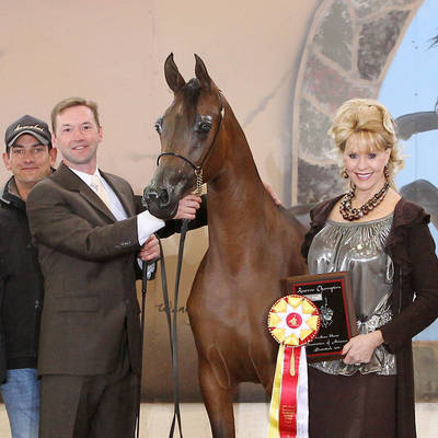ALWAYS VALENTINE MI with Andrew Sellman - 2011 Scottsdale Reserve Junior Champion Filly