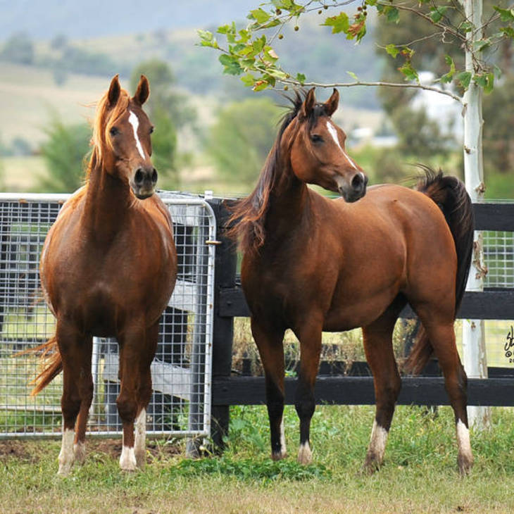 FAMES HARMONY with full sister MYSTIC FAME