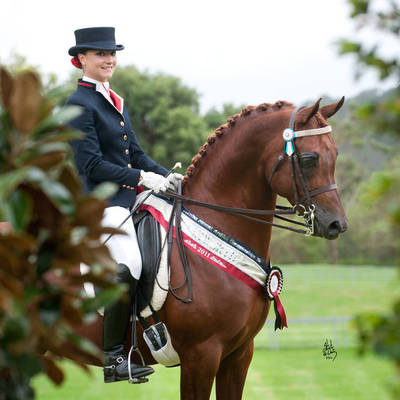 Australian Champion MULAWA BRONZE WINGS - AHSA Purebred Saddle Horse of the Year