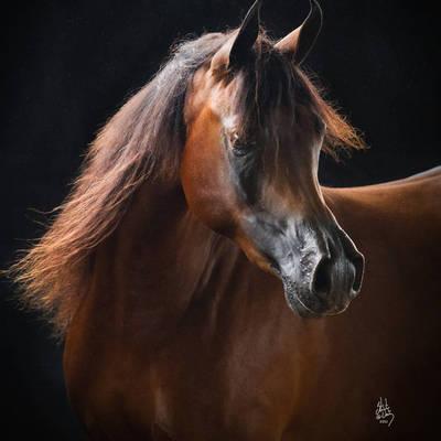 Australian Reserve Champion ASPIRING VALENTINO MI