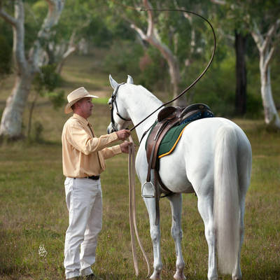 Australian Champion Working Stock Horse KLASS