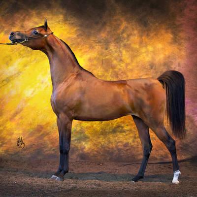 ROMANCE MI | Australian Champion Two & Three Year Old Mare