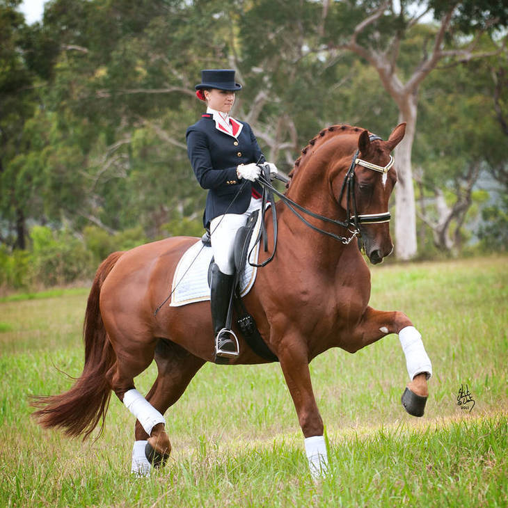 LUXOR | Australian Champion Advanced Dressage