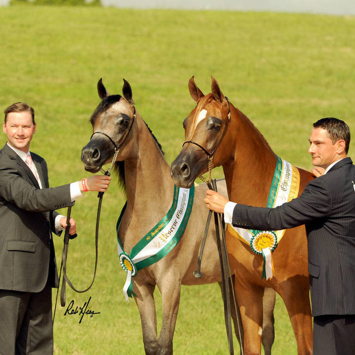 2012 Australian National Champion Yearling Filly & Reserve Champion MI KLASSIC FANTASY
