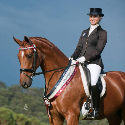 Australian National Champion Ridden Warmblood Mare