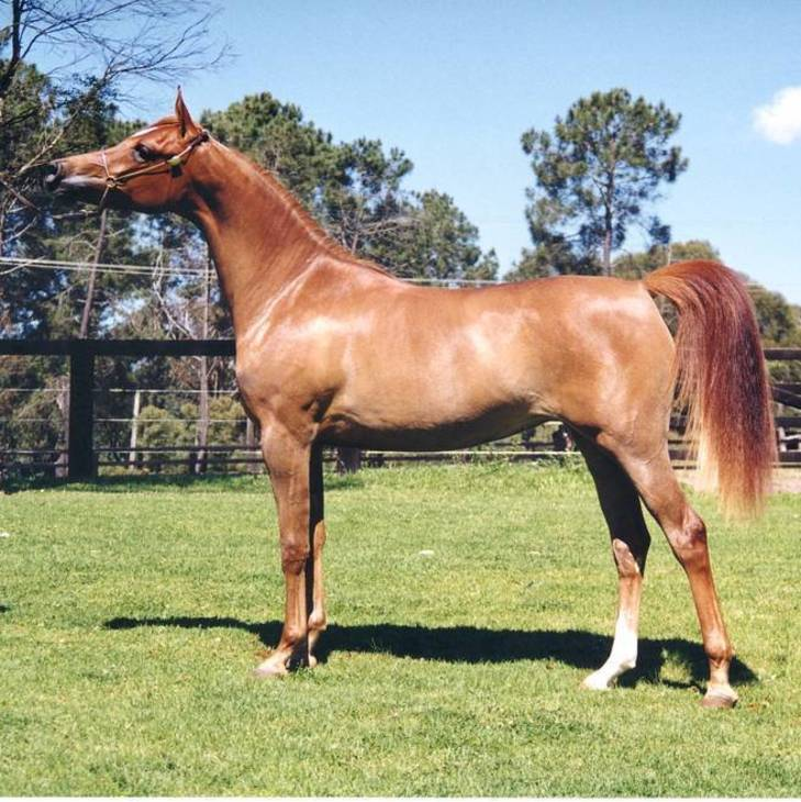 BEFAME as a yearling