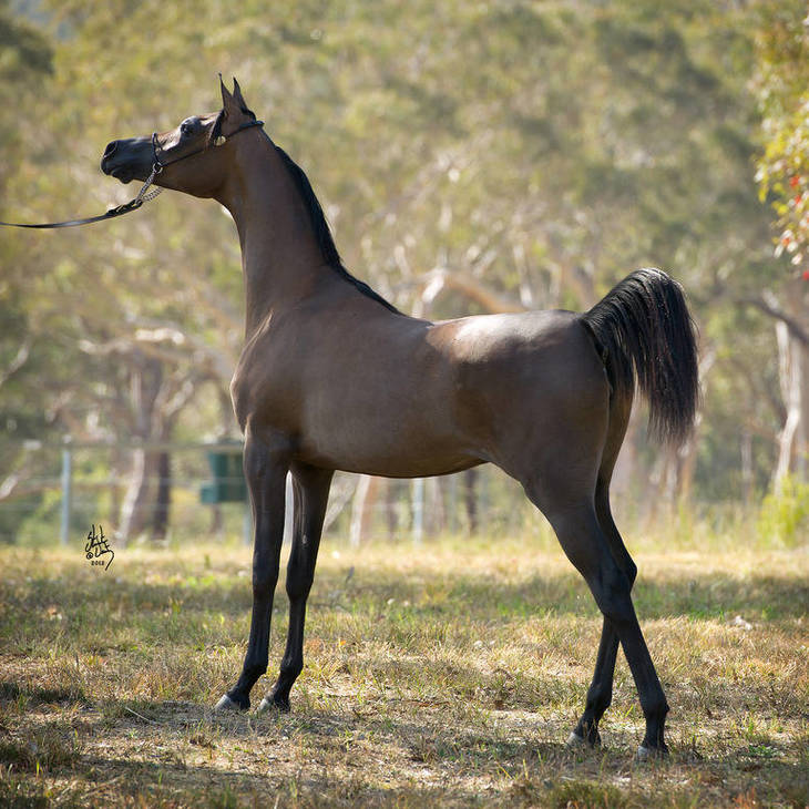 IMPRESSA MI as a Yearling