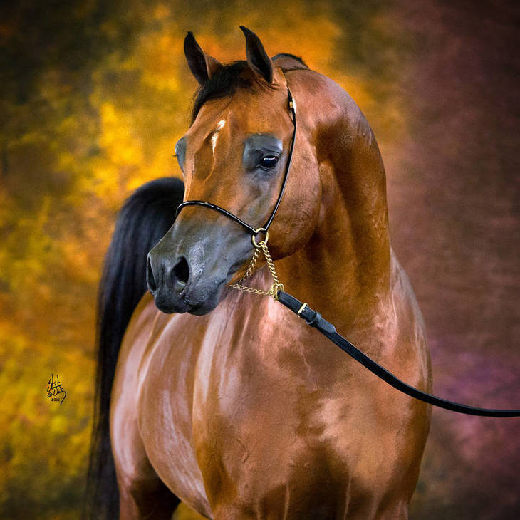 GUILIANO | Sire of SANTIAGO MI