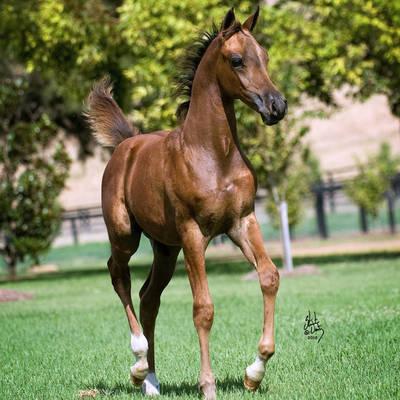 PLATINUM MI as a foal
