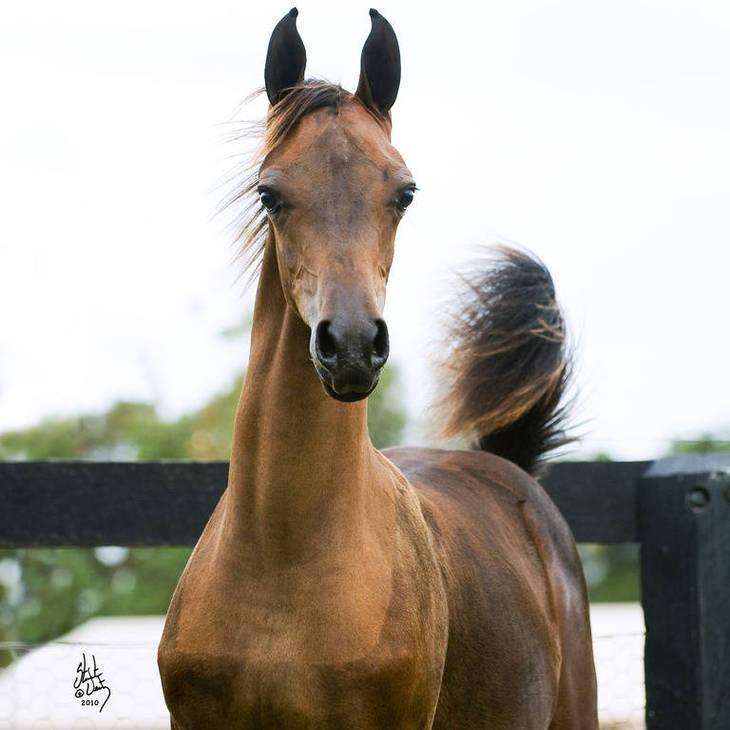 ALWAYS VALENTINE MI as a foal