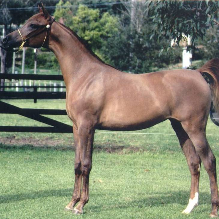 ANGEL OF FAME as a yearling
