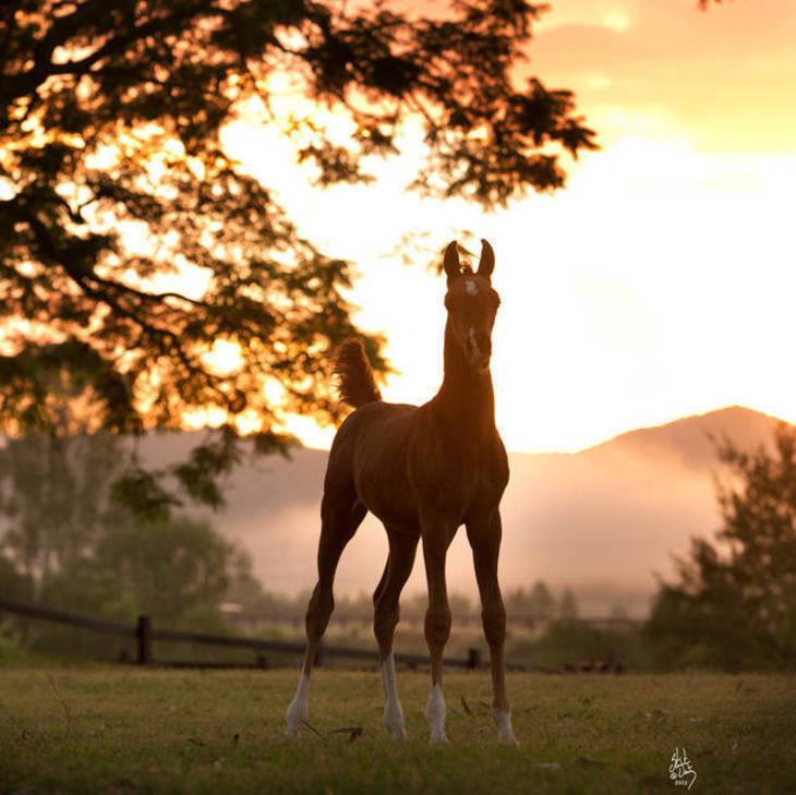 PRUSSIA MI as a foal
