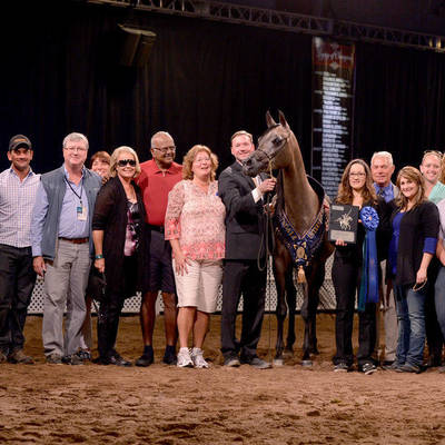 IMPRESSA MI | Scottsdale International Gold Champion Senior Mare