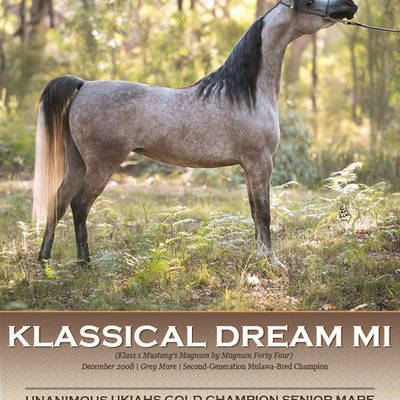 KLASSICAL DREAM MI | Unanimous UKIAHS Gold Champion