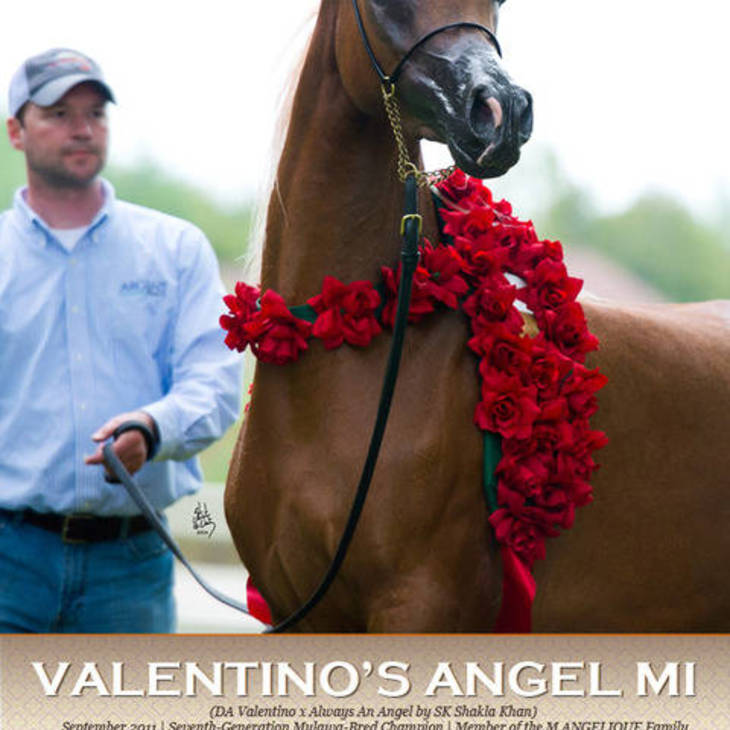 US National Champion VALENTINO'S ANGEL MI