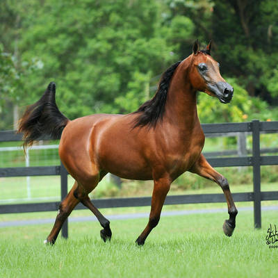 BE INFATUATED | Dam of KLASSICAL BELLE MI