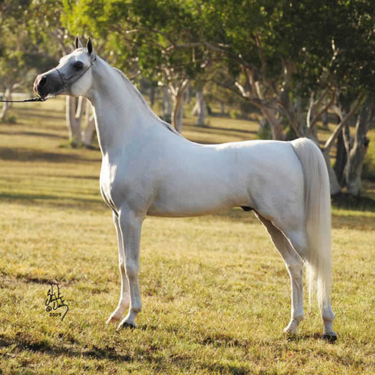 KLASS | Sire of KLASSICAL BELLE MI