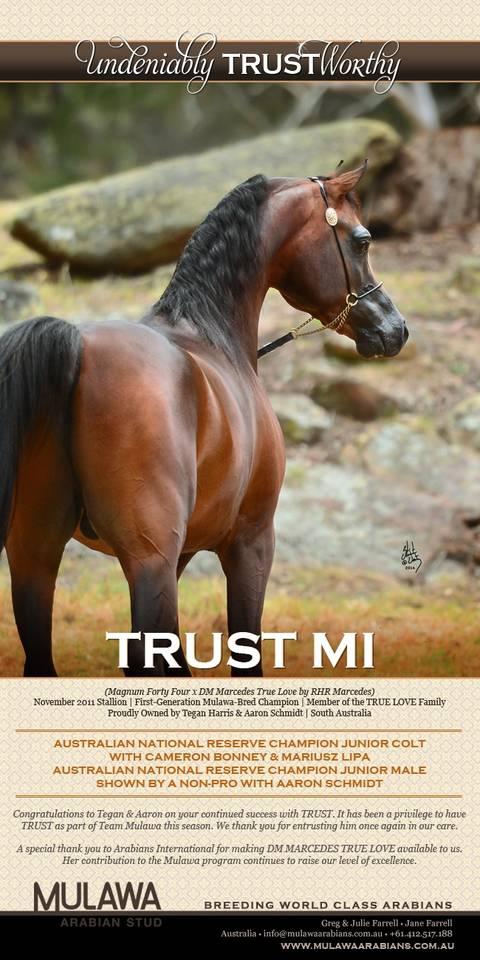 TRUST MI   Australian National Reserve Champion