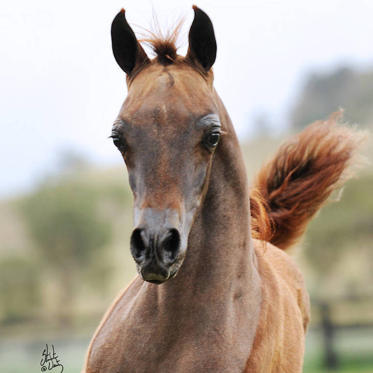 ALLEGIANCE MI as a foal
