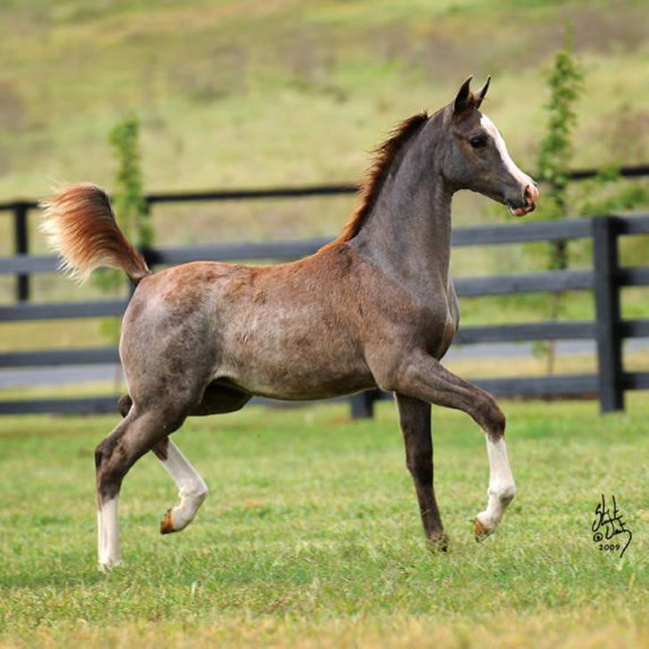KLASSIC HARMONY MI as a Foal