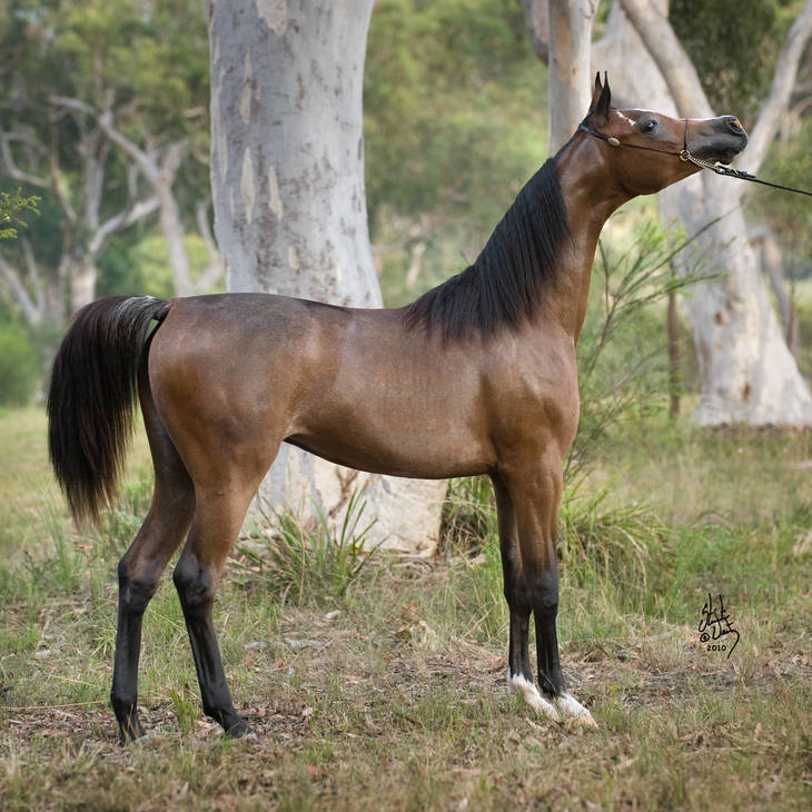 KLASSICAL DREAM MI as a Yearling
