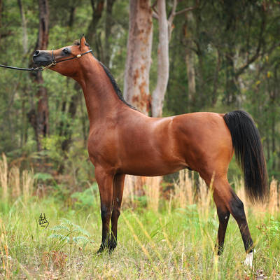 MAXIMISE MI as a Yearling
